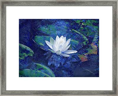 Water Lily Framed Print by Ann Powell