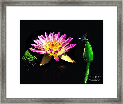 Water Lily Dragon Fly Framed Print by Nick Zelinsky