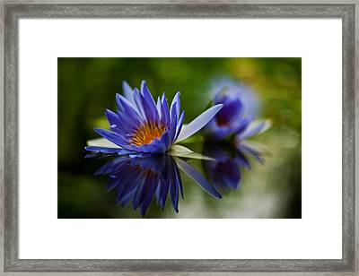 Water Lily Reflections Framed Print by Mike Reid