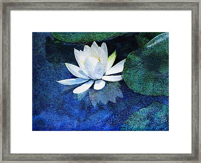 Water Lily Two Framed Print by Ann Powell