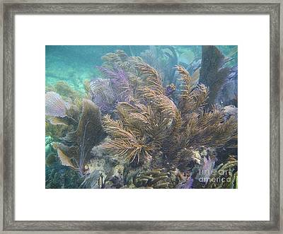 Water Winds Framed Print by Adam Jewell