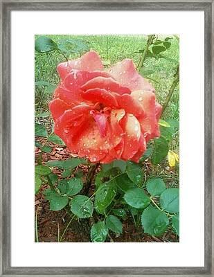 Watered By Nature Framed Print by Erica  Darknell