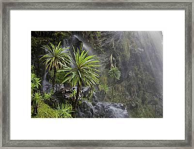 Waterfall At Mount Stanley, Ruwenzori Framed Print by Martin Zwick