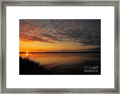 Waterfront Dawn Framed Print by Terri Gostola