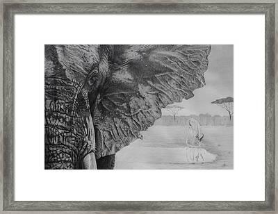 Waterhole Framed Print by Tim Dangaran