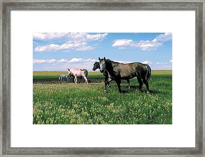 Watering Hole 2 Framed Print by Terry Reynoldson