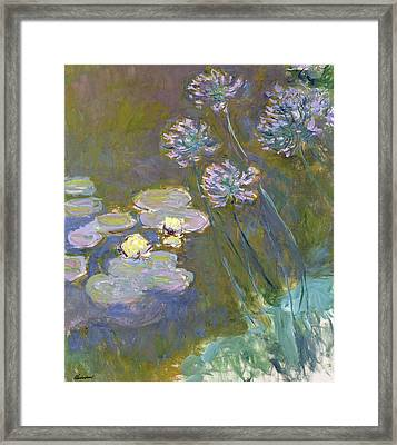 Waterlilies And Agapanthus Framed Print by Claude Monet