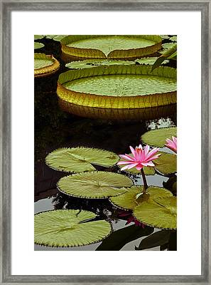 Waterlilies And Platters Vertical Romance Framed Print by Byron Varvarigos