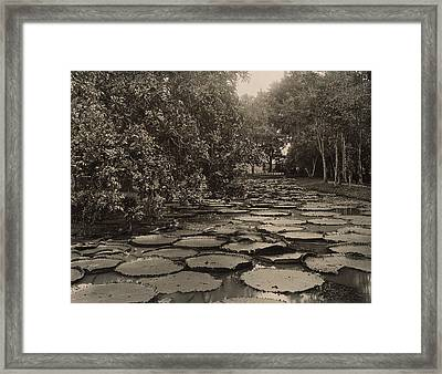 Waterlilies Framed Print by French School