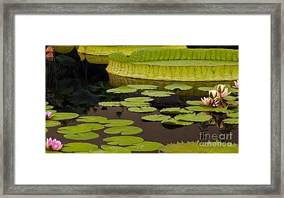 Waterlily Charm Framed Print by Byron Varvarigos
