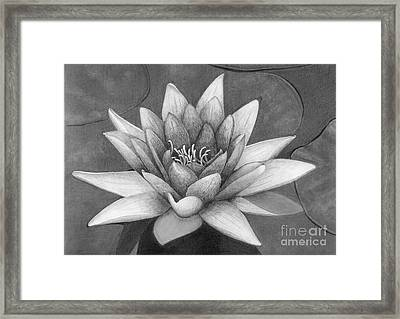 Waterlily Framed Print by Nicola Butt