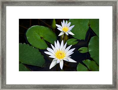 Waterlily Two Framed Print by Christi Kraft