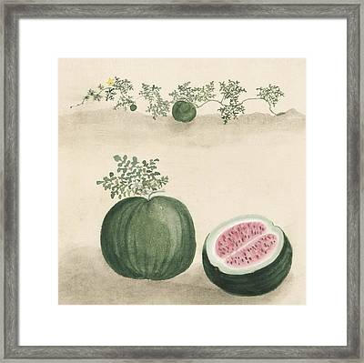 Watermelon Framed Print by Aged Pixel