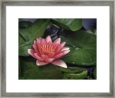 Water's Edge Framed Print by David and Carol Kelly