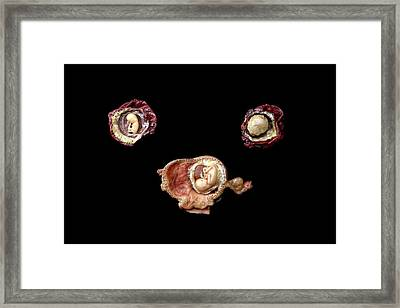 Wax Models Of Human Foetuses Framed Print by Gregory Davies