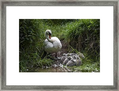 We All Here Mum Framed Print by Svetlana Sewell