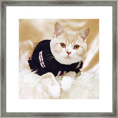 Wearing A Sweater Framed Print by Aiolos Greek Collections