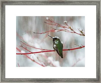 Wearing Snowflakes Framed Print by Angie Vogel