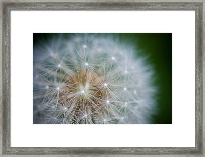 Weed Of Mass Destruction Framed Print by Amy Stonebraker