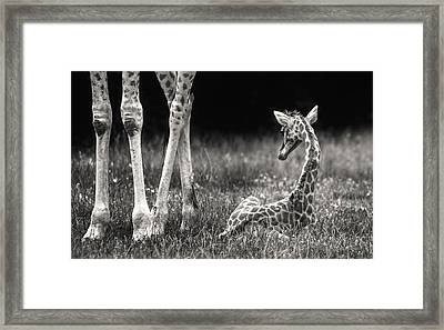 Camouflage Framed Print featuring the photograph Well Protected by Andreas Feldtkeller