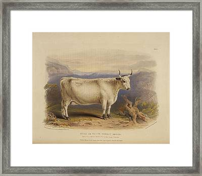 West Highland Breed Framed Print by British Library