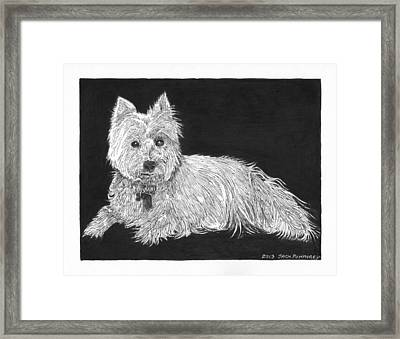 West Highland White Terrier Framed Print by Jack Pumphrey