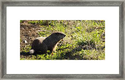 West Virginia Wombat Framed Print by Howard Tenke