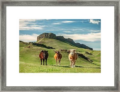 Western Longhorns Framed Print by Todd Klassy