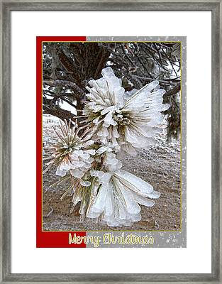 Western Themed Christmas Card Pine Needles And Ice Framed Print by Amanda Smith
