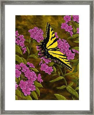 Western Tiger Swallowtail And Evening Phlox Framed Print by Rick Bainbridge