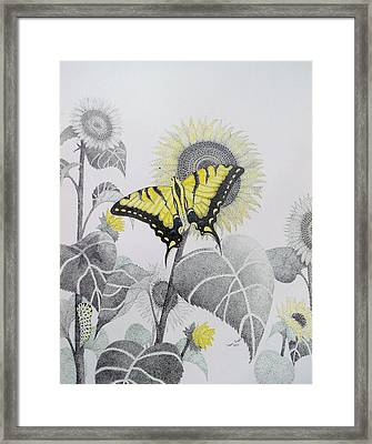 Western Tiger Swallowtail And Sunflower Framed Print by Tammie Temple