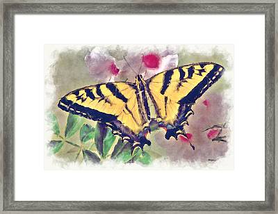 Western Tiger Swallowtail Papilio On Flower Framed Print by Robert Jensen