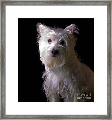 Westie Drama Framed Print by Edward Fielding