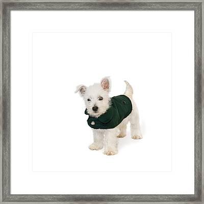 Westie Puppy In A Coat Framed Print by Natalie Kinnear