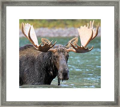 Wet And Hungry Framed Print by Adam Jewell