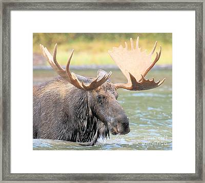 Wet Beard Framed Print by Adam Jewell