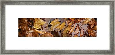 Wet Leaves Framed Print by Panoramic Images