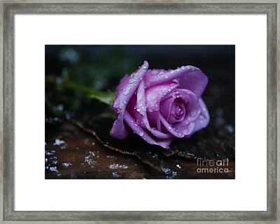 Wet Rose Framed Print by Jonathan Welch