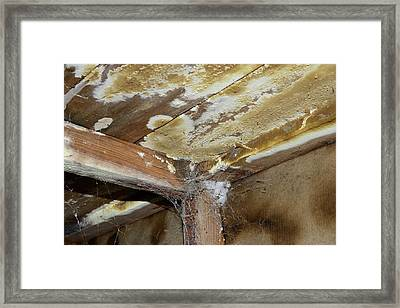 Wet Rot Framed Print by Cordelia Molloy