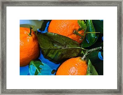 Wet Tangerines Framed Print by Alexander Senin