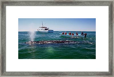 Whale Watch Framed Print by Doug Gould
