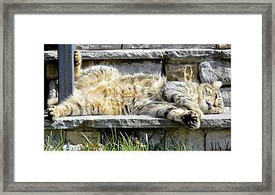 What A Day Framed Print by Susan Leggett