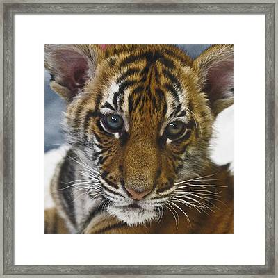 What A Face D3875 Framed Print by Wes and Dotty Weber
