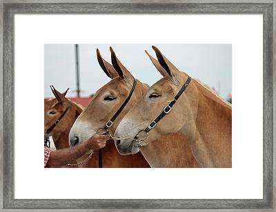 What A Team Framed Print by Brenda Donko
