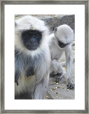 What Are You Looking At? Framed Print by Russell Smidt