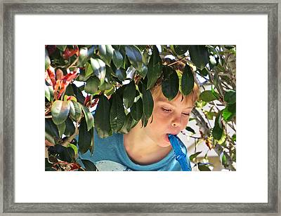 What Boys Are Made Of - Trees And Music Framed Print by Ella Kaye Dickey