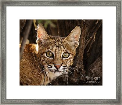 What Did You Say Framed Print by Carl Jackson