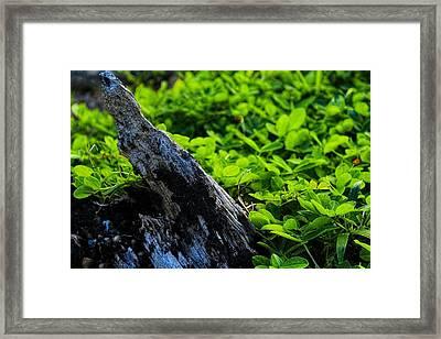 What Is Left Of My Ucar Tree Framed Print by Sandra Pena de Ortiz