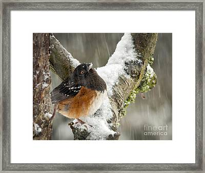 What Is This? Framed Print by Inge Riis McDonald