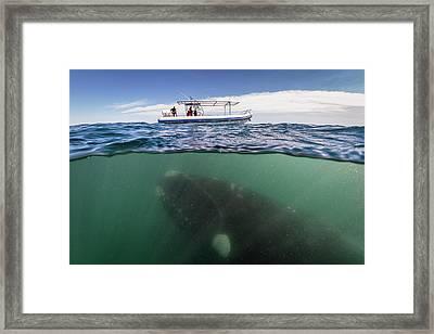 What Lies Beneath Framed Print by Justin Hofman